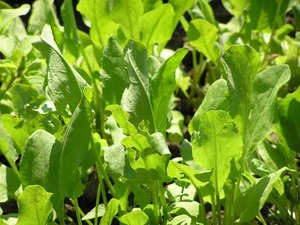 Пищевые растения, которые обладают антитоксическими свойствами