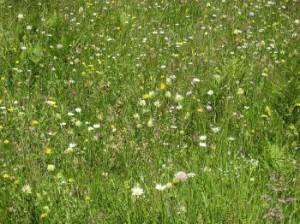 Купели из сенной трухи трав
