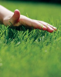 Сбор целительных трав весной