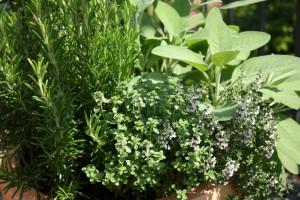 Применение лечебных трав