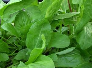 Пищевые растения – это главный источник витаминов