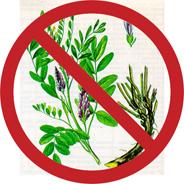 Растения имеющие противопоказания к применению